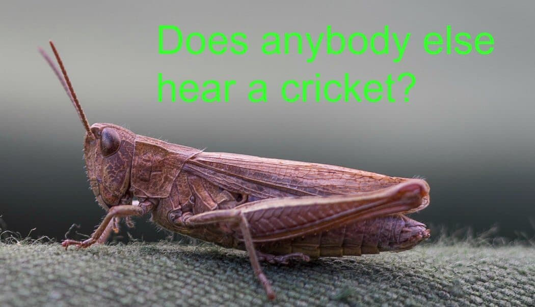 You, your content, and your relationship with crickets